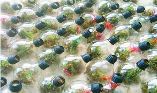 Häufig Comment faire un mini-terrarium dans une ampoule - Webzine Café Du Web WR54